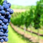 Nuevo Acceso a las Solicitudes de Marcas de Vinos
