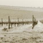 Boletín de vigilancia de marcas de vinos: Último número 2011