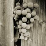 Boletín de vigilancia de marcas registradas sector vinos ::: Febrero 2011