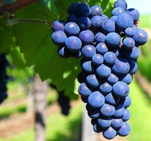 Las claves para el registro de marcas y diseños en el mundo del vino