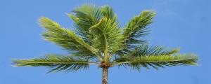 Republica Dominicana. Comparativa patentes y marcas con Espana