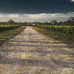 Suscripción gratuita a los boletines de vigilancia de marcas del sector del vino