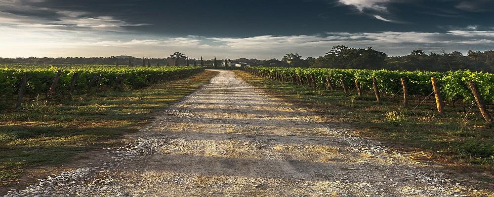Suscripcion gratuita a los boletines de vigilancia de marcas del sector del vino