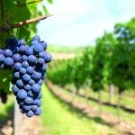 Nuevo boletín de vigilancia de solicitudes de marcas para vinos: Abril 2013
