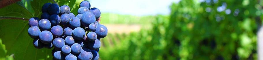 Boletín de vigilancia de marcas para vinos Septiembre 2013