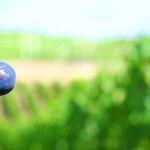 Boletín de vigilancia de marcas de vinos: Septiembre 2013