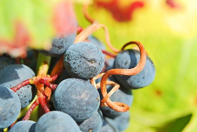Boletín de marcas de vino