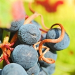 Boletines de marcas de vino: de Octubre a Diciembre 2013