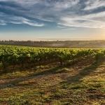 Protectia en Vinetur: estrategias de protección de marcas de vino