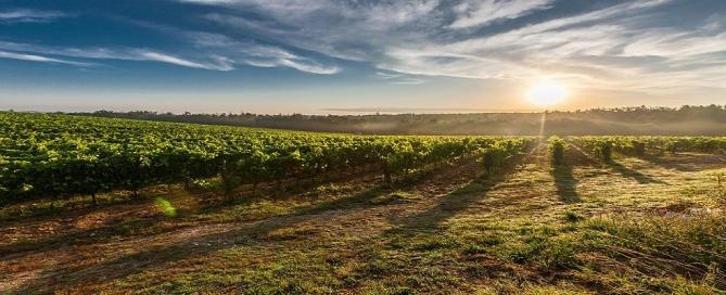 proteccion de marcas de vino
