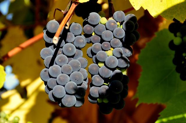Boletín de vigilancia de marcas de vino Abril 2014