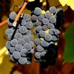 Boletín de vigilancia de marcas de vino: Abril 2014