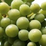 Boletín de vigilancia de marcas de vino: Mayo 2014