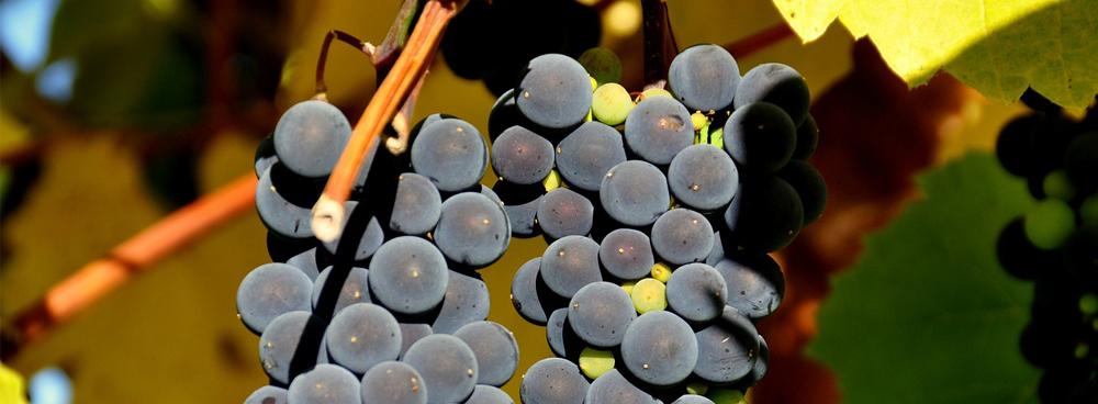 boletines de vigilancia de marcas vino