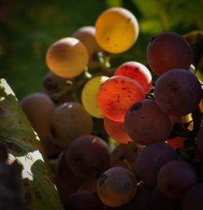 marcas vino