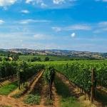 Boletín de vigilancia de marcas de vino: Diciembre 2014