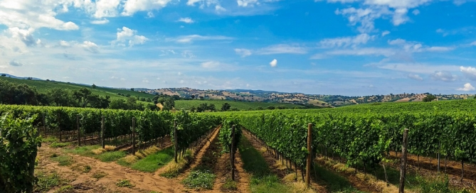 boletin de vigilancia de marcas de vino diciembre 2014