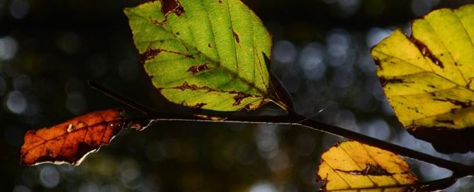 boletines de vigilancia de patentes verdes enero 2015