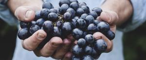 Boletín de vigilancia de marcas de vino: Abril 2015
