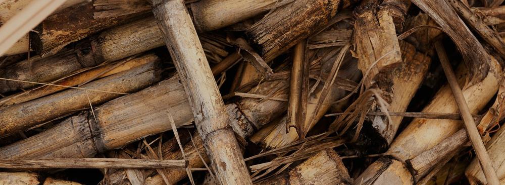 vigilancia invenciones de biomasa